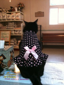 Addison's favorite dress